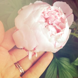 Smell the Peonies